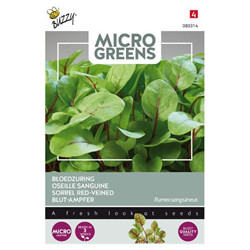 Graines Micro greens oseille sanguine