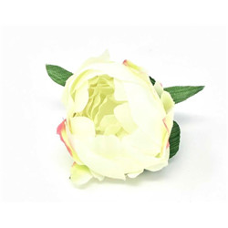 Rose ancienne blanche